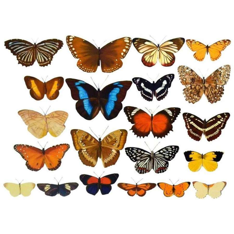 Photo Realistic Painting of Butterflies by Bridget Orlando
